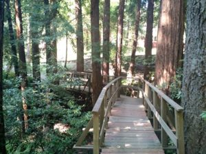 Ferndell Creek Walking Bridge
